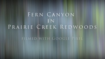 Fern Canyon- Prairie Creek